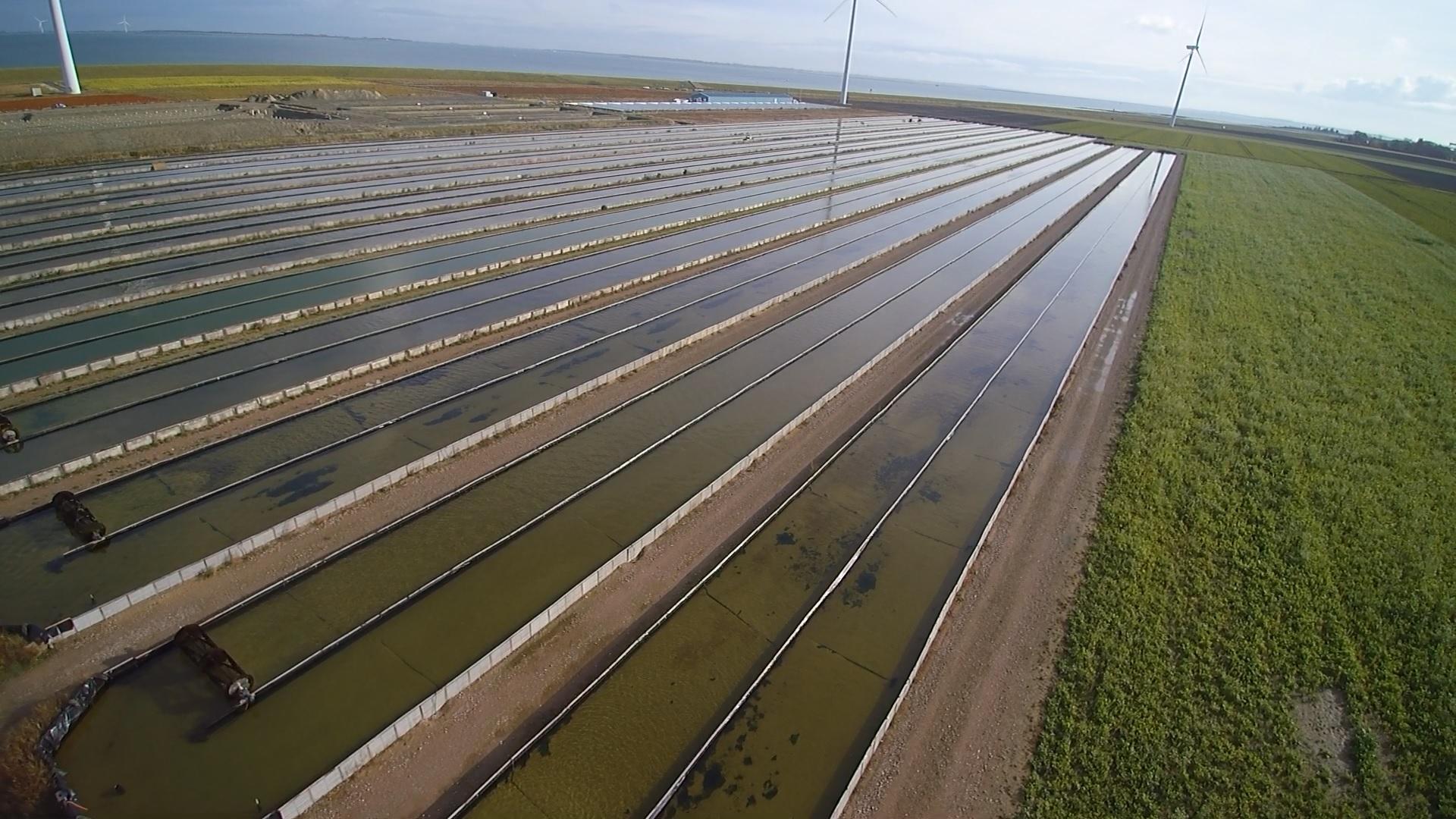 Delta Farms - Aquaculture